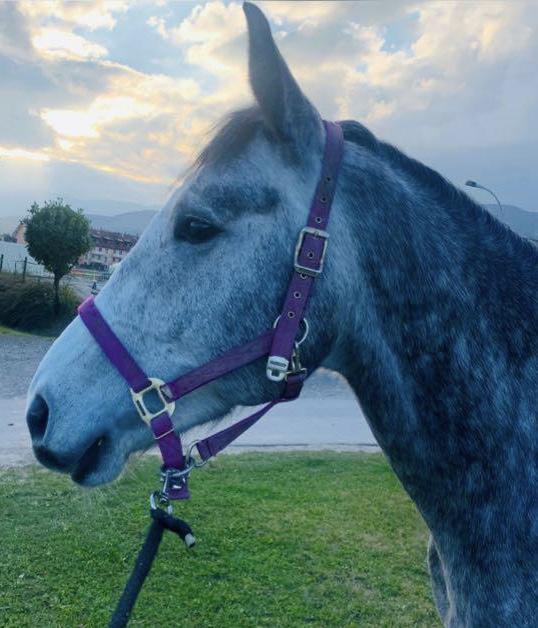 Regards à l'oeuvre Mages 1er juillet 2021 Dorveau Z le cheval bleu